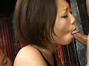 Miku Misato sucks one cock then jerks off 2 at once